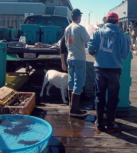 Fishermen's Market Saturday Harbor 8