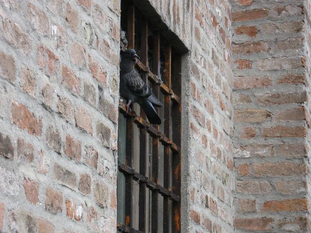 マントヴァの鳩のフリー写真素材