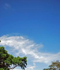 Trees in Sidama, Ethiopia - 21.1.2011 (shell shock) Tags: africa sky ethiopia awassa sidama yirgalem
