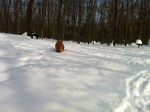 Holly in the snow.