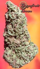 Grapefruit Dream (focusdank) Tags: green grass fruit weed smoke dream 420 medical pot bud dope grape herb chronic greed dank nugs