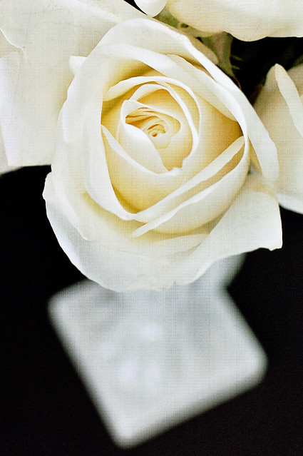 black/white rose florabella