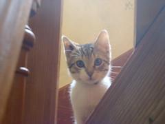 le début d'une carrière (auchat) Tags: cat chat little sony kitty gato bébé compact petit pequeno chaton début unamourdechat
