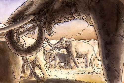 mammoths-summer