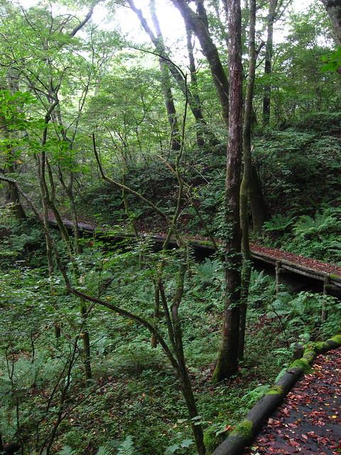 軽井沢の山道のフリー写真素材