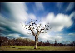 D2.........V2 (Digital Diary........) Tags: longexposure sky blur tree clouds landscape movement filter sleepyhollow chrisconway weldingglass