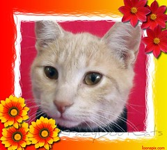 Mommy Says I have to go to the Vet Tomorrow 2-16 (KrazyBoutCats) Tags: cats pets animals kittens felines