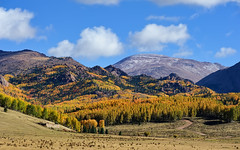 First Snow on Pike's Peak (Fort Photo) Tags: travel autumn sky mountain fall nature clouds forest landscape rockies nikon colorado view rocky peak co vista pikes rockymountains 14er aspen pikespeak teller 1610 nikon80200 d700