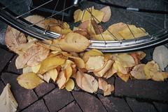 000010_1 (KarenGuy) Tags: autumn winter red holland netherlands leaves amsterdam bike wheel yellow spokes paving kodachrome autumnal tyre denegenstraatjes