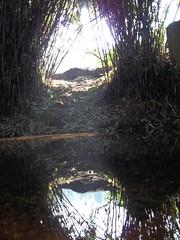 100_0165 (travellersai) Tags: kerala treehouse wayanad teaestate wildboar bandipur chital vythri banasuradam soojiparafalls streamvalleyresorts
