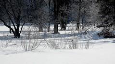 winter landscape. . . . . (Ed Brodzinsky) Tags: trees winter snow landscape upstatenewyork newyorkstate elkcreek schenevus edbrodzinsky