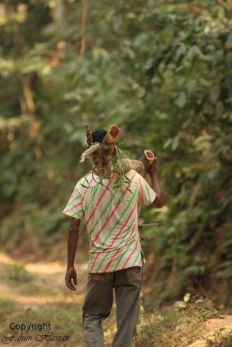 Indiscriminate Logging