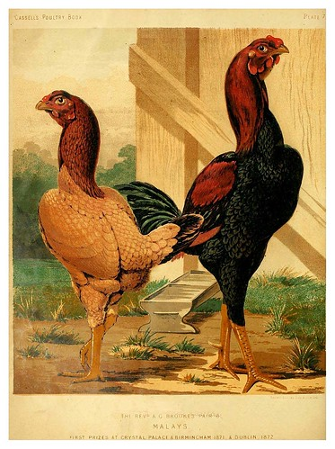 002--The illustrated book of poultry. With practical scheduals…1873-Lewis Wright