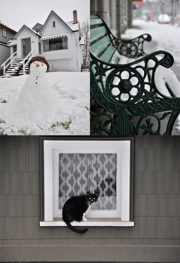 Snowy compilation cat