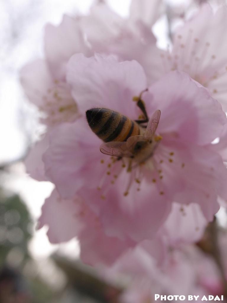 2011.3.6 大屁蜂