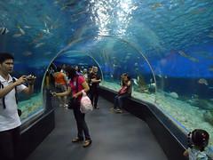 manila ocean park-1 (divingoff) Tags: ocean park fish aquarium hotel h2o manila h2ohotel manilaoceanparkhotel