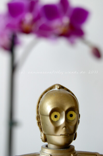 Threepio + orchid