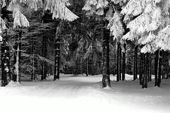 Kahler Asten (Guido Havelaar) Tags: blackandwhite bw monochrome blackwhite zwartwit monotone christmastree schwarzweiss pretoebranco winterwonderland neroeblanco