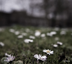 Desenfoque. (mChuca) Tags: parque flores faro nikon barcos pontevedra carril 2470 vilaxoan goians mchuca feitoenvilanova