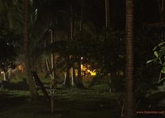 Night_forrest_rain