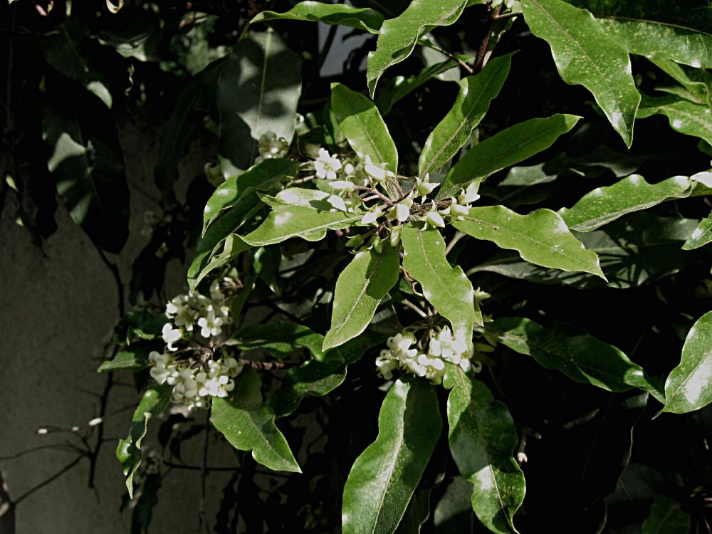 19-03-2011-flower-fantastic-scent3