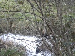 option environnement - Argentr du Plessis (lasallesaintjoseph) Tags: saint joseph moulin la neuf printemps salle option environnement svt 6me biologie collge argentr vivelessvt
