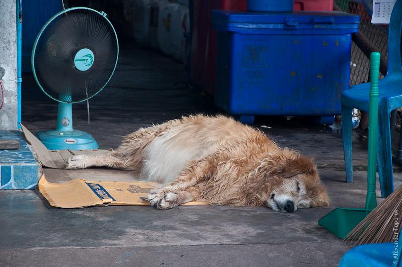 Lazy dog