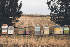 bee homes (meeganz) Tags: color spring farm beehouses