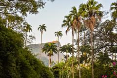 DSC_5389 (sergeysemendyaev) Tags: 2016 rio riodejaneiro brazil jardimbotanico botanicgarden     outdoor nature plants   palms   green  beauty