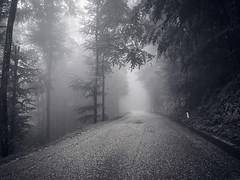 The Myst (schechen) Tags: mist fog abstract tree forest slovenia europe travel landscape fear bear light wood roadtrip road hiking fuji