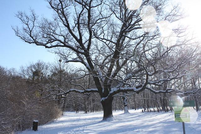 Lieblingsbaum