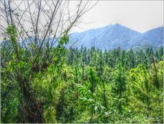 Finca Chimelb (HDR) (Fernando Reyes Palencia) Tags: guatemala paisajesdeguatemala bellospaisajesdeguatemala fotosdeguatemala bellaguatemala paisajesdelmundo guatemalalandscapes laeternaprimavera imagenesdeguatemala guatebella guatemalapaisajes chimelb postalesdeguatemala