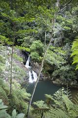 Springbrook National Park (Stephen D Harper) Tags: australia currumbin goldcoast springbrooknationalpark