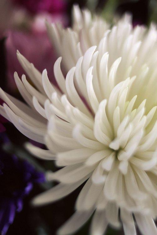01-24-flowers
