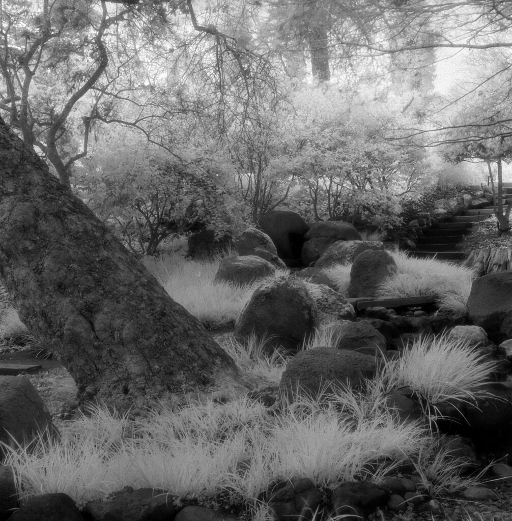 Botanical Gardens, Golden Gate Park, San Francisco. (Scene 2, Efke with 87 Filter)