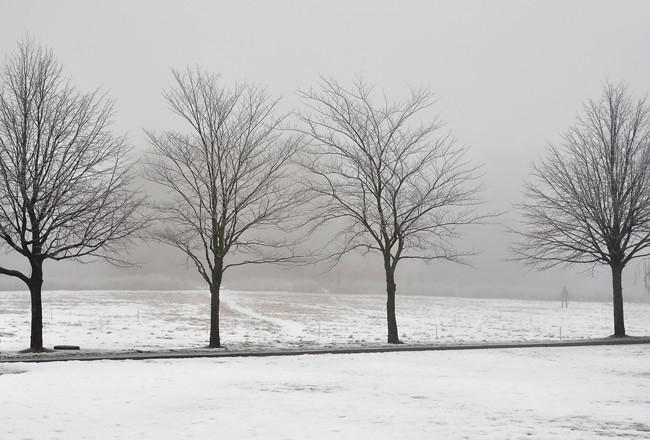 4 träd