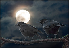 """Fly me to the Moon"" (TT_MAC) Tags: moon bird composite night moonlight nightsky crow victoriabc coth visionqualitygroup oracosm oracope sailsevenseas doubleseparateexposures compositeoftwophotosbyme"
