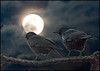 """""""Fly me to the Moon"""" (TT_MAC) Tags: moon bird composite night moonlight nightsky crow victoriabc coth visionqualitygroup oracosm oracope sailsevenseas doubleseparateexposures compositeoftwophotosbyme"""