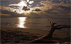 Guardo il Sole... (leon.calmo) Tags: canon tramonto nuvole mare pisa cielo toscana tronco spiaggia gabbiani fiatlux opposti eos50d boccadiserchio leoncalmo migliarinopisano