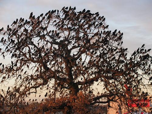 A Hundred Zillion Birds