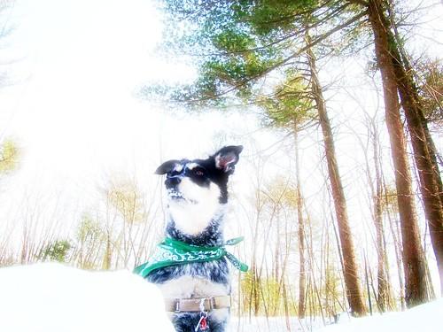 snowshoeing adventure