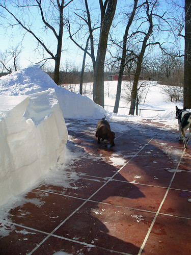 2011-02-02 - Snow Pile! - 0006