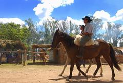 Serenito (Eduardo Amorim) Tags: horses horse southamerica totora criollo caballo uruguay cheval caballos straw cavalos pferde cavalli cavallo cavalo gauchos pferd ramada pampa rancho enramada hest hevonen chevaux gaucho santaf  amricadosul hst uruguai gacho  campero amriquedusud  gachos  sudamrica suramrica amricadelsur  sdamerika crioulo caballoscriollos totoras criollos   rancherio camperos americadelsud tacuaremb  crioulos cavalocrioulo americameridionale caballocriollo campeiros campeiro eduardoamorim cavaloscrioulos iayayam yamaiay fiestadelapatriagaucha departamentodetacuaremb pampauruguaio pampauruguaya