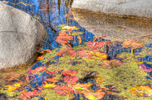HDR of a pond