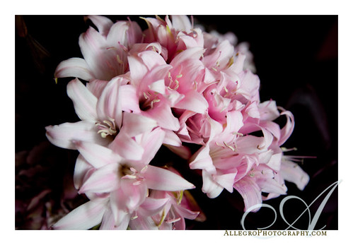 grace-ormonde-tabletop-mimosa-style- pink flowers- intimate wedding venue- mistral- boston ma