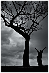 Freedom (Kupih) Tags: morning cloud storm reflection tree beach silhouette sunrise river landscape dead island seaside coconut calm malaysia raining manualfocus terengganu marang rangfinder kapasisland kupih leicam9 hafizahmadmokhtar leicasummiluxm35mm14