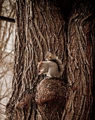Noms (raelala) Tags: nyc newyorkcity squirrel squirrels manhattan cityhallpark morgenstern canon1785mm canoneos7d canon7d