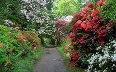 Leonardslee Gardens, West Sussex, England | Tr...