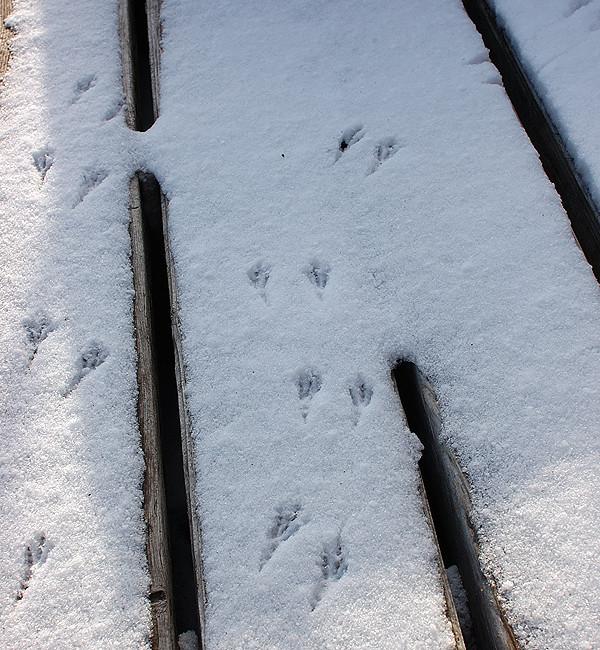 雪の上のすずめの足跡