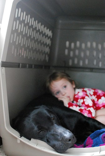 snuggling in the kennel